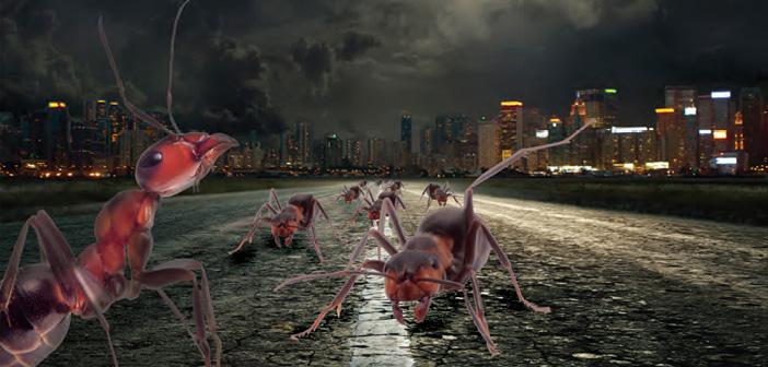 İİnsan İncitmeyen Karıncalardan, Karınca İnciten İnsanlara
