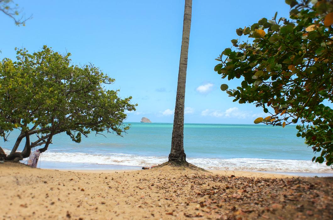plage-de-clugny-guadeloupe-sauvage-intense-sable-belle-ombre-palmier