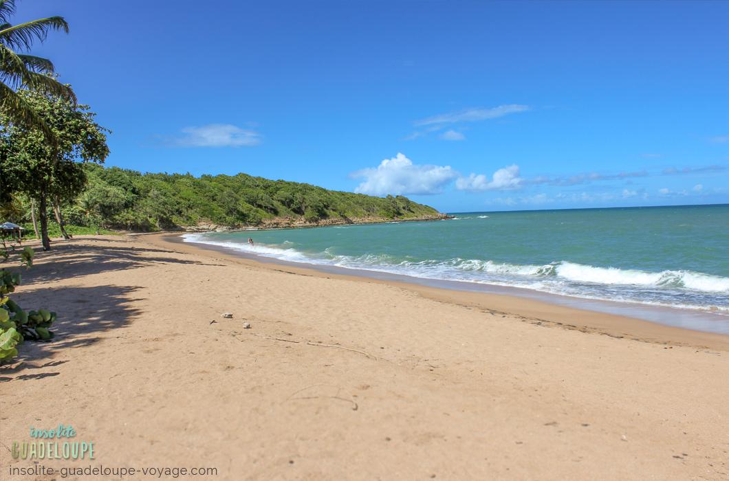 plage-des-amandiers-guadeloupe-sable-fin-ombre-belle-basse-terre-tranquille-eau-turquoise