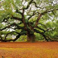 Marvelous Metaphor: An Oak Tree brought into Creation