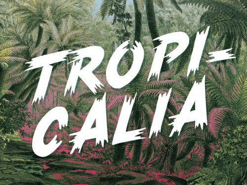 tropicalia brush typeface by rocco barbaro 50 Free Fonts Youll be Tempted to Download