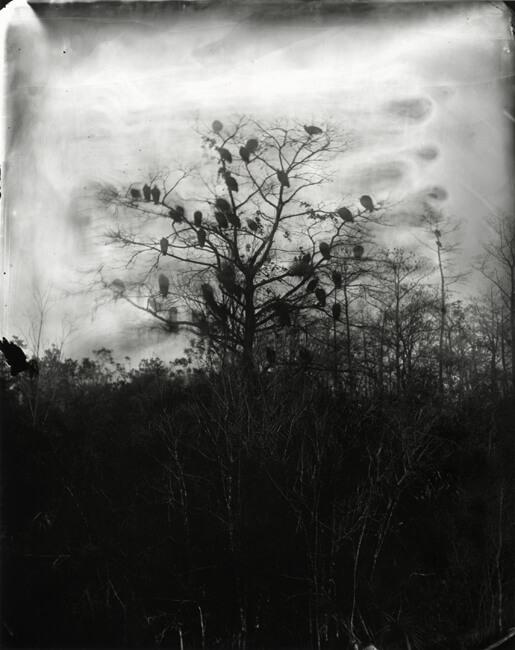 Film Photography11