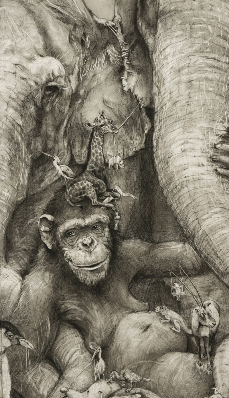 Ape Drawing
