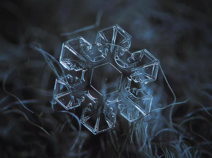 macro snow flake004