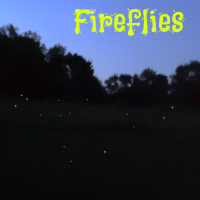 How to Attract Fireflies