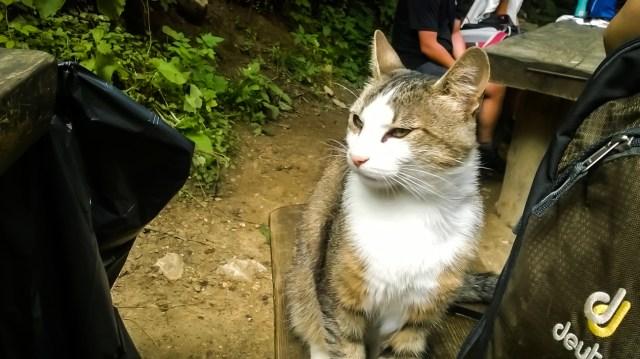 Tomcat from 7 Scari cabbin