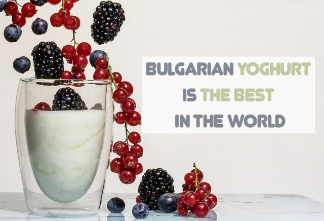 yogurt-bulgaria