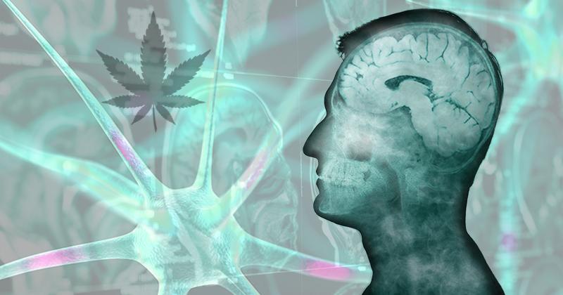 adicción al cannabis