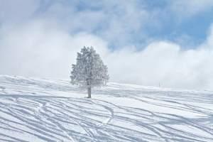 ski-vii