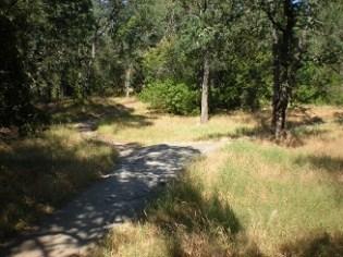 16. Trail fork
