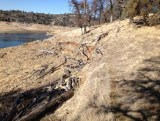 Following the deer trail on shoreline of Folsom Lake, east side