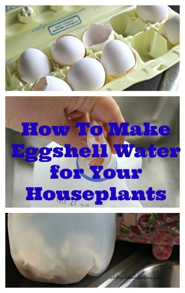 How to Make Eggshell Water for Your Houseplants.intelligentdomestications.com