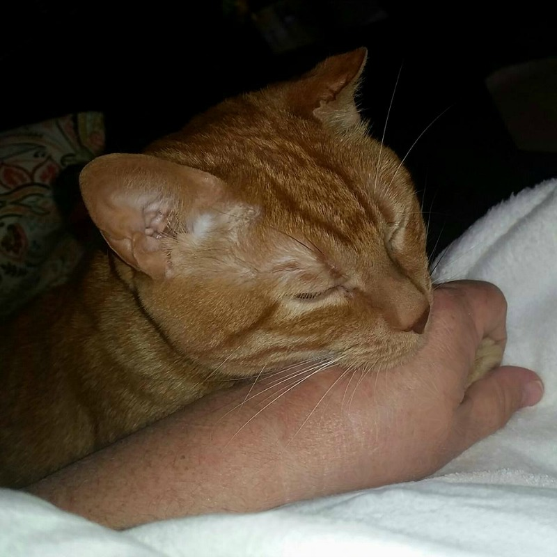 Heebly like to hold hands. He's such a lover