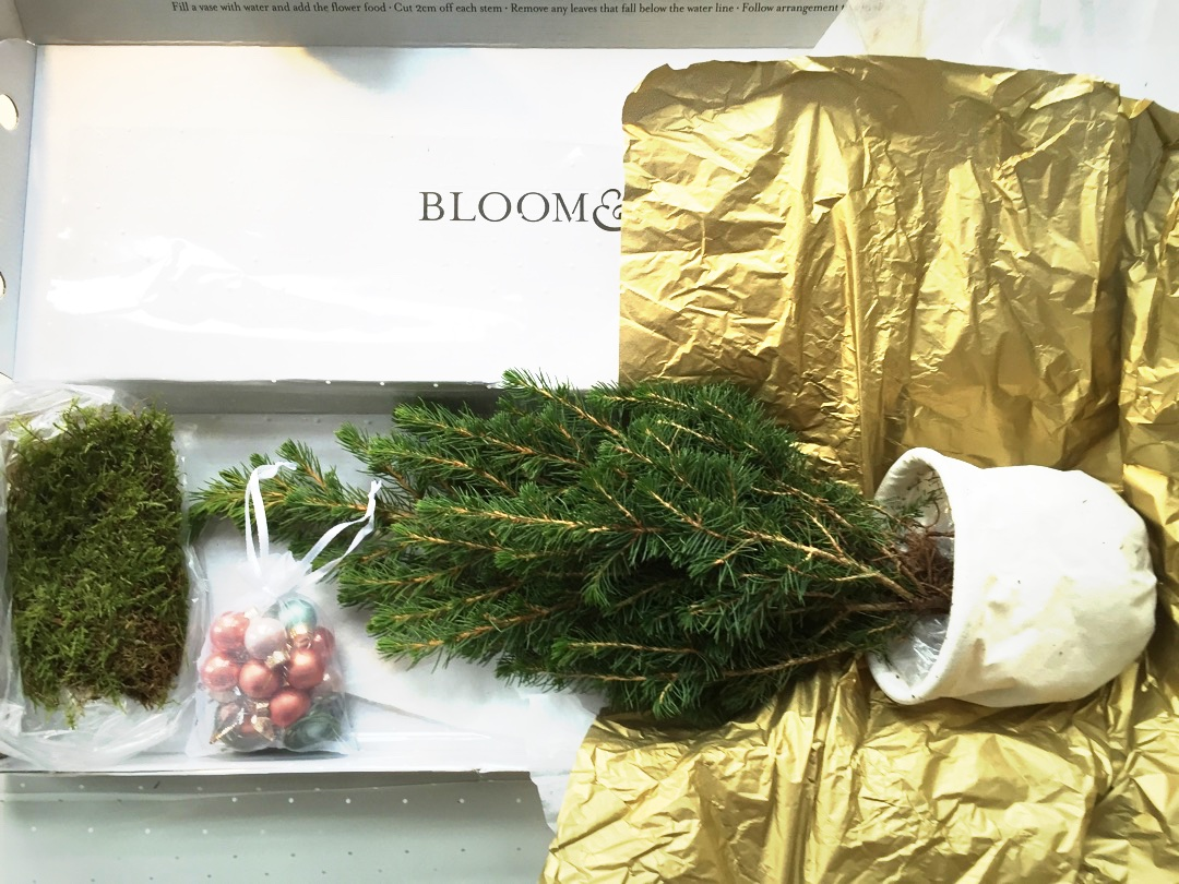 Christmas tree in a box from bloom wild for Christmas tree in a box