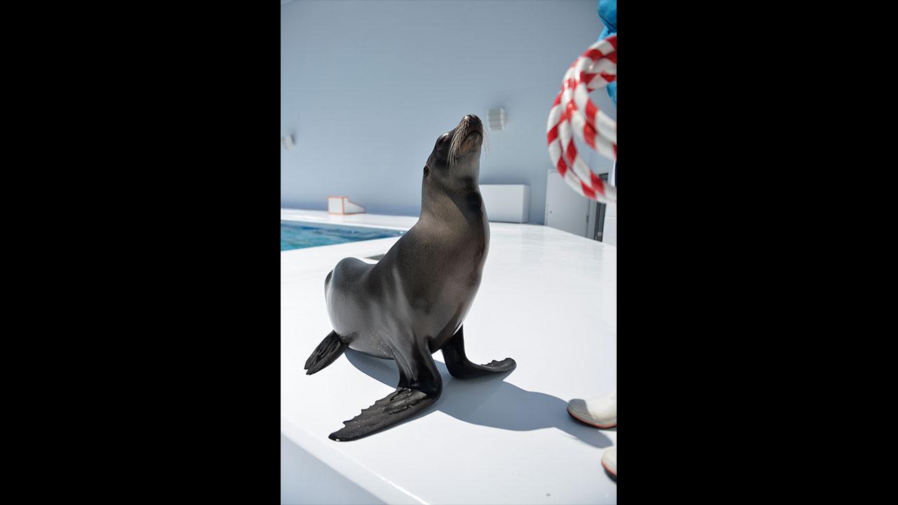 aquariumguide_0001_01