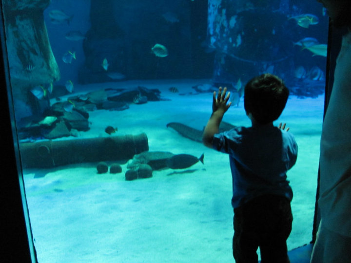 Day Out At London Aquarium In The Playroom