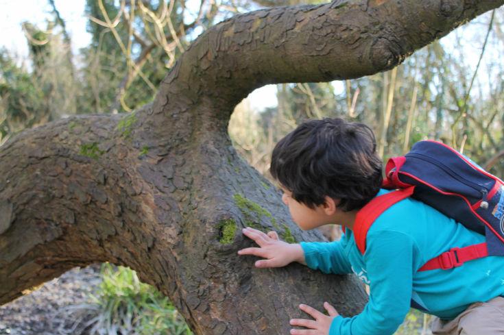 denham country park tree climbing