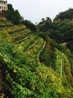 cinque terre e vino di flaminia cesa intothewine 7