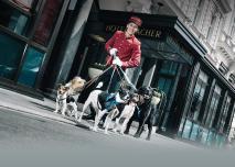 croppedimage1220870-Sacher-Pets