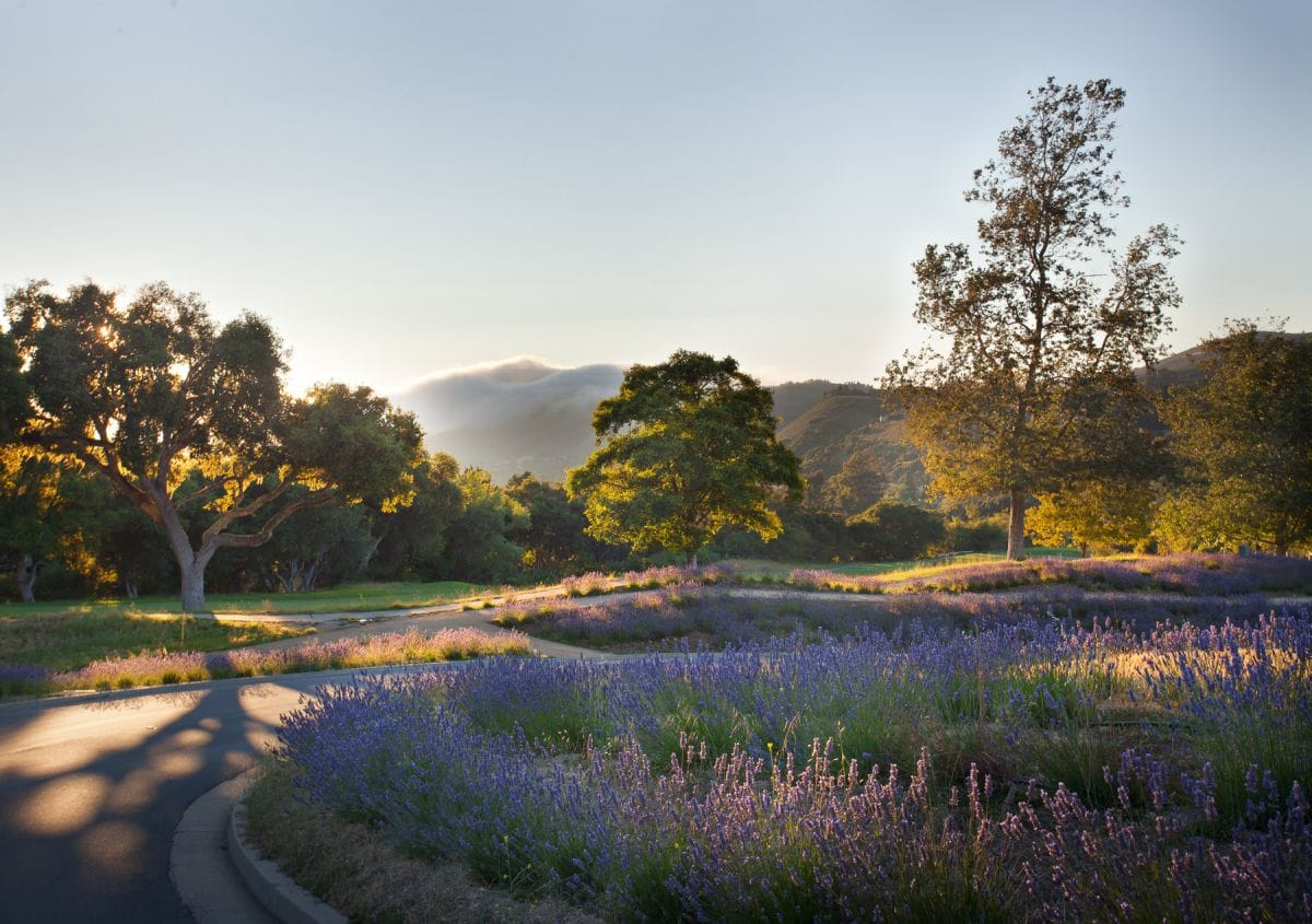Just Checked Out: Carmel Valley Ranch, California