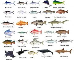 Fish Chart for Fishing in Cocoa Beach
