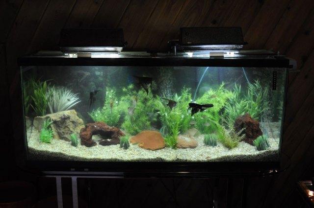 clean Aquarium is a healthy Aquarium