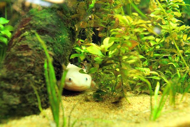 14 Fun Axolotl Facts Fun Facts You Need to Know!