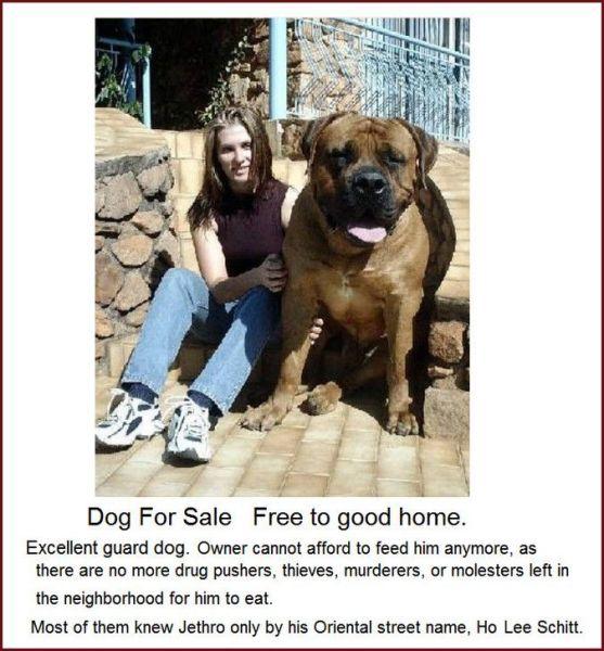 Dog for sale - Jethro - Giant dog
