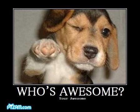 Who's awesome? You're Awesome dog