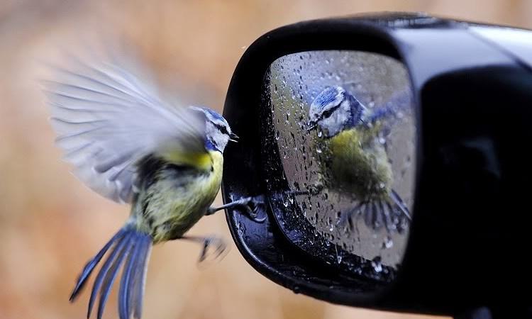 A bird admires itself