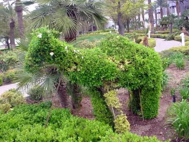 Topiary Camel, Ballys - Las Vegas, Nevada