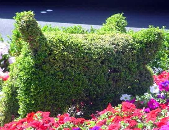 topiary pig butt, ballys las vegas, nevada