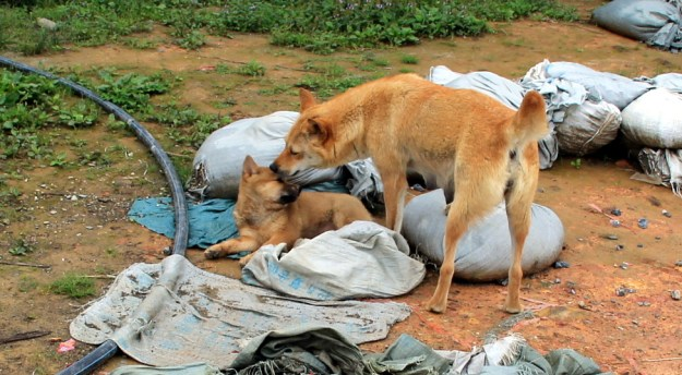longsheng mother and puppy