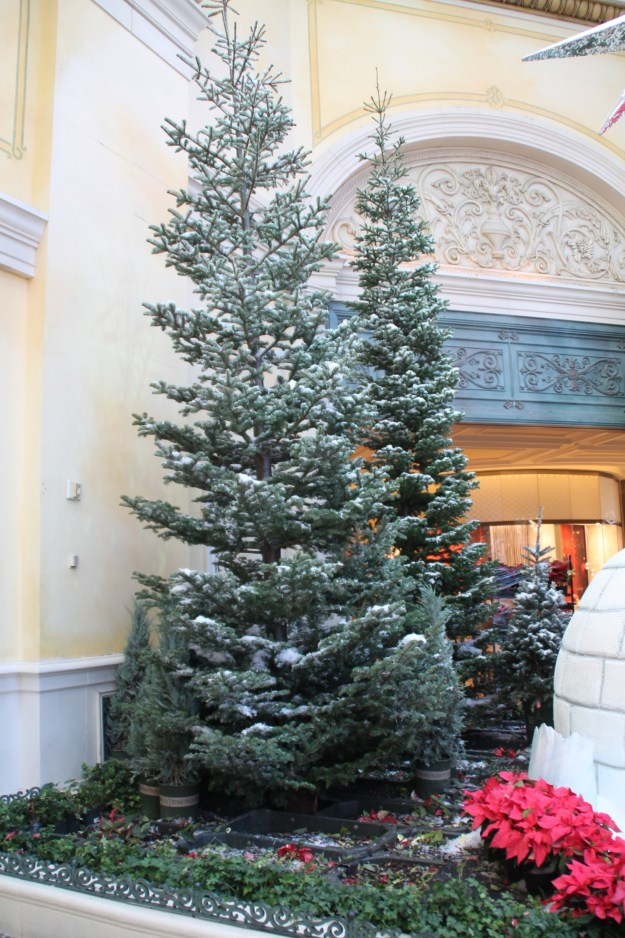 Bellagio conservatory Christmas trees with actual snow on them