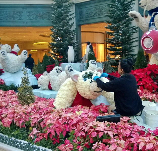 bellagio las vegas conservatory christmas brain surgery bear