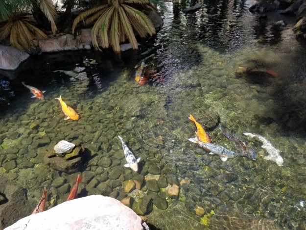 flamingo las vegas koi pond