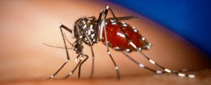 Public Urged to Increase Mosquito Eradication – Health Ministry