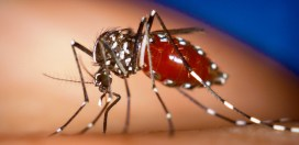 Visitors from Yellow Fever Active Countries to be Denied Entry Into Jamaica