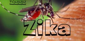 Five confirmed Ziv V cases in St. Ann
