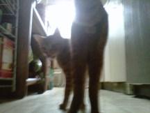Pre-castration kitty