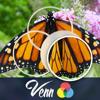 Wiggles 3D - Venn Butterflies: Overlapping Jigsaw Puzzles アートワーク