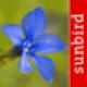 Alpenblumen Id Automatik - Blumen bestimmen in der Schweiz, Österreich und in den Alpen in Deutschland