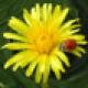 Wildpflanzen zum Genießen