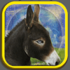 Guleser Ozdemir - The Story of Horse and Donkey アートワーク