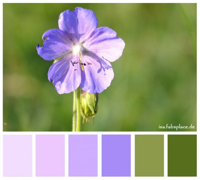 Colors: Purple Flower