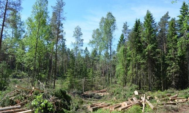 How Deforestation is devastating Pakistan