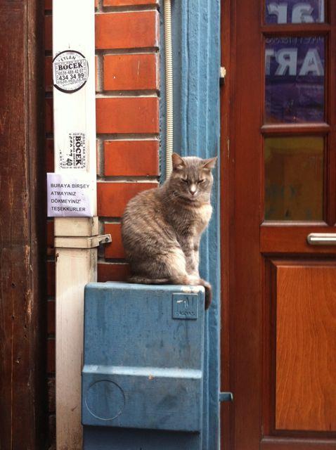 Straßenkatze Istanbul