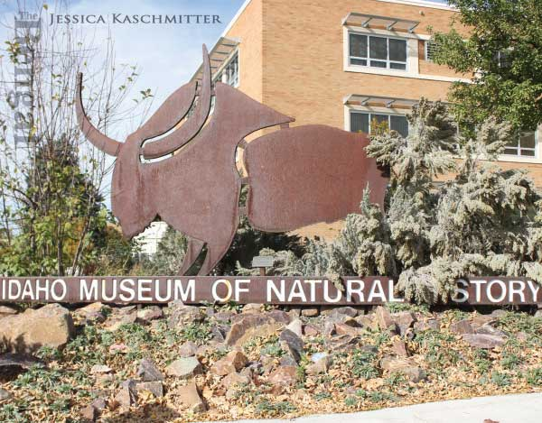 Idaho Museum of Natural History bison sign