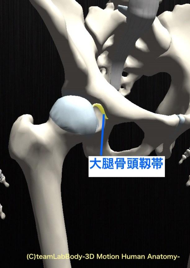 大腿骨頭靱帯