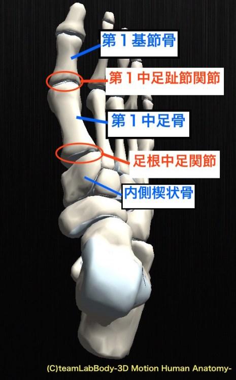 第1中足趾節関節